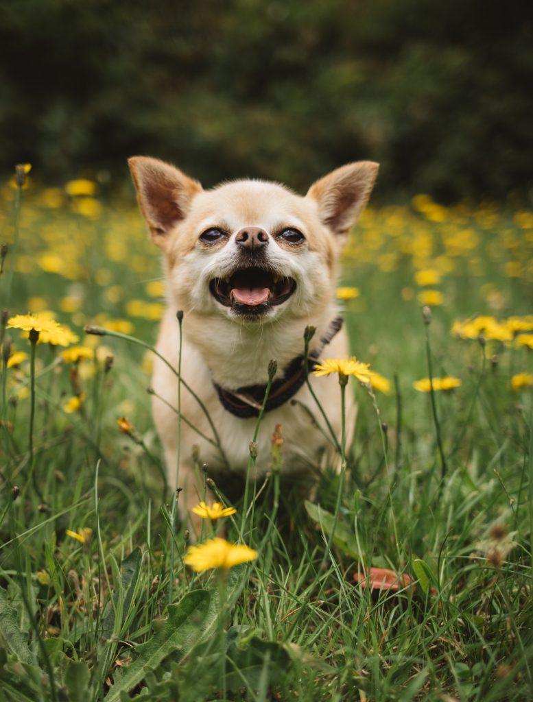 Puppy in een grasveld vol bloemetjes